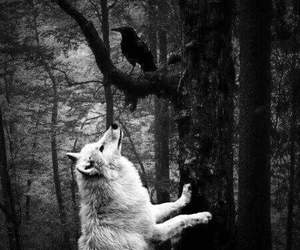 wolf, crow, and forest image