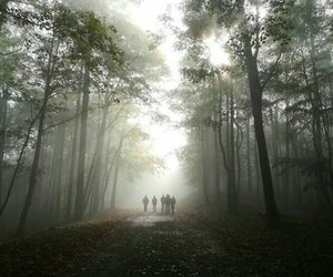 autumn, day, and fog image