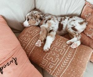 cushions, dog, and cute image