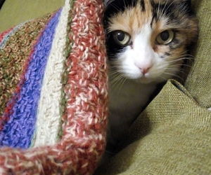 cat, lovely, and my life image