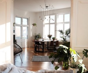 home, interior, and plants image