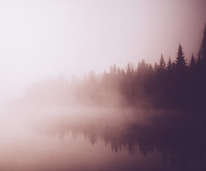 background, forest, and picture image