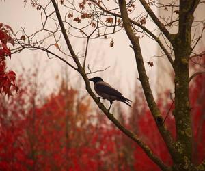 autumn, bird, and fall image
