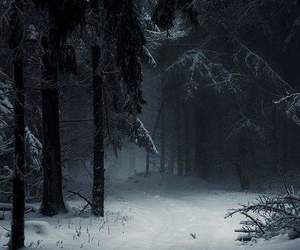 forest, winter, and snow image