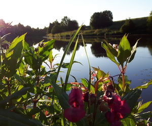 flowers, nordic, and river image
