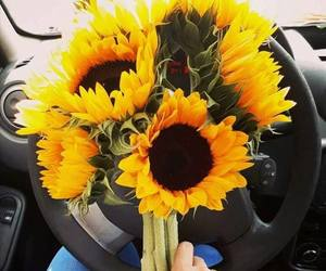 flowers, sunflowers, and cute image