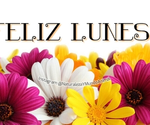 flores, nature, and spanish image