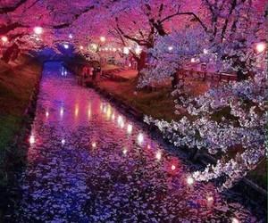 nature, japan, and pink image