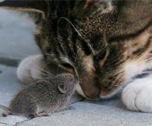 cat, cutest, and mouse image