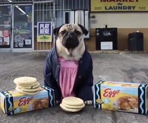 pugs and stranger image