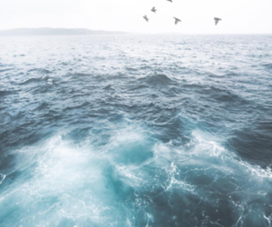 blue, ocean, and coast image