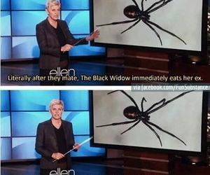 funny, Taylor Swift, and ellen image