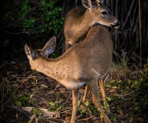 florida, funny, and deers image