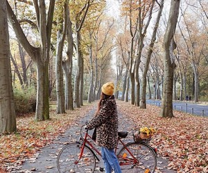 autumn, bike, and bycicle image