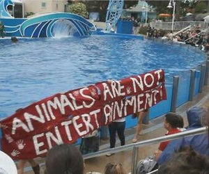 animal and entertainment image