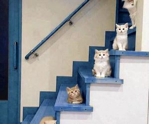 cat, animal, and stairs image