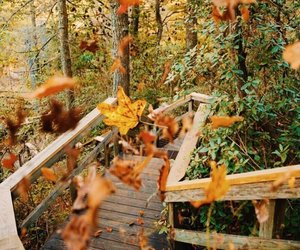 autumn, leaf, and jesień image
