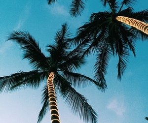 beach, landscapes, and palms image