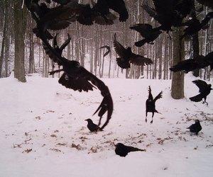 snow, bird, and crow image
