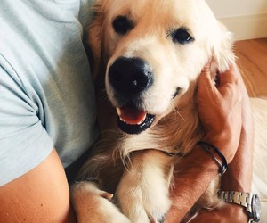 cute, animals, and dog image
