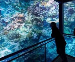 aquarium, coral reef, and aesthetic image