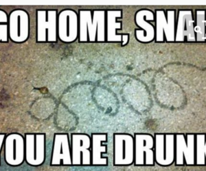 snail, funny, and drunk image