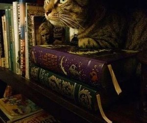 book, magic, and cat image