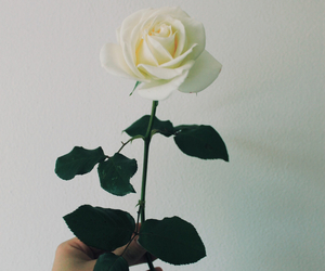 rose, indie, and flowers image