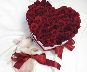rose, dog, and love image