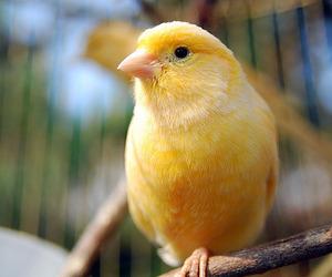 bird, animal, and canary image