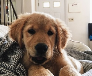 animal, inspiration, and puppy image
