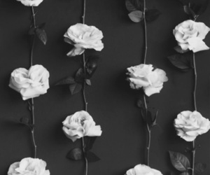 rose, wallpaper, and flowers image