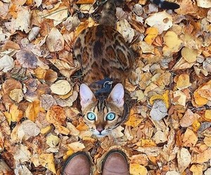 autumn, cat, and animal image