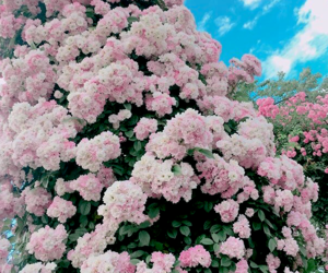 flowers, green, and pastel image