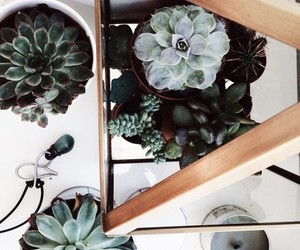 flowers, succulent, and tumblr image