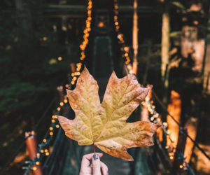 autumn, fall, and lights image