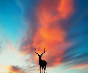 animation, photos, and sunset image