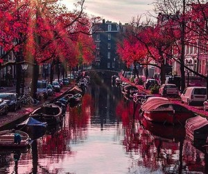 amsterdam, city, and leaves image