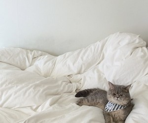 aesthetic, white, and cat image