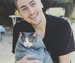 Animales, gato, and true love image
