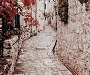 flowers, Croatia, and dubrovnik image