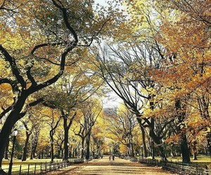 autumn, beautiful, and Central Park image