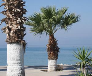 beautiful, palms, and sea image