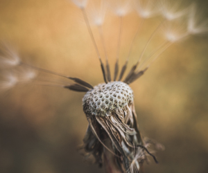 charlotte nc, nature, and fine art nature image