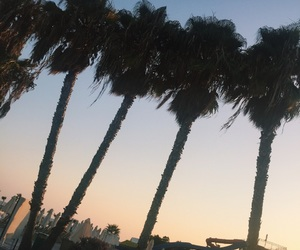 cyprus, palm tree, and paphos image