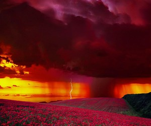 nature, lightning, and flowers image