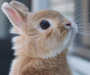 adorable, animals, and rabbit image