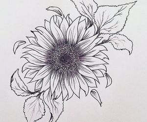 autumn, draw, and sunflower image