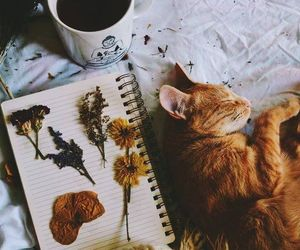 cat, autumn, and coffee image
