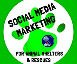 animals, volunteer, and marketing image